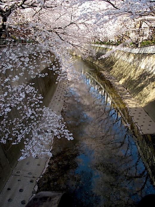 桜IMG_5399.jpg